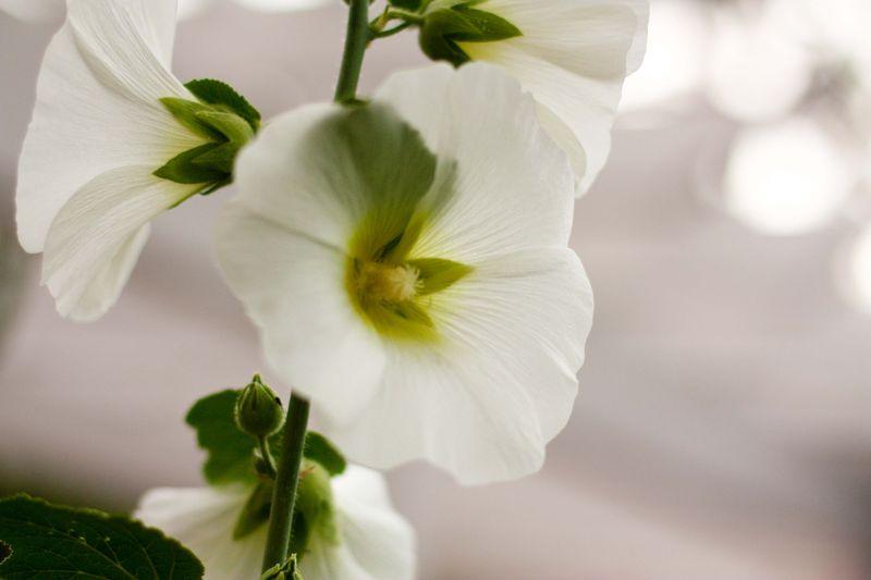 Flowers 03